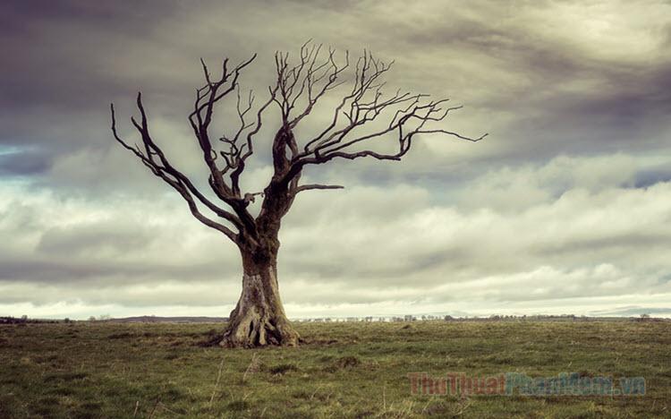 Những hình ảnh phong cảnh buồn cực đẹp