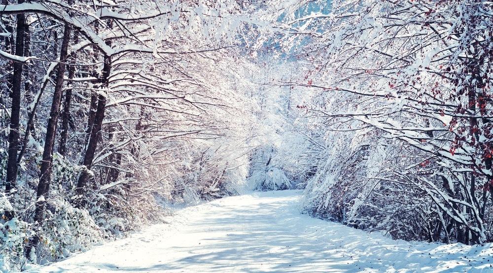 Hình ảnh khu rừng tuyết rơi