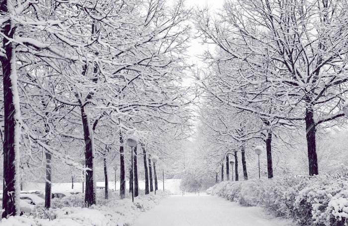 Hình ảnh tuyết rơi lạnh lẽo