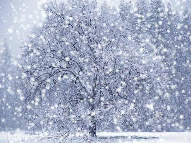 Hình ảnh tuyết rơi trắng đẹp