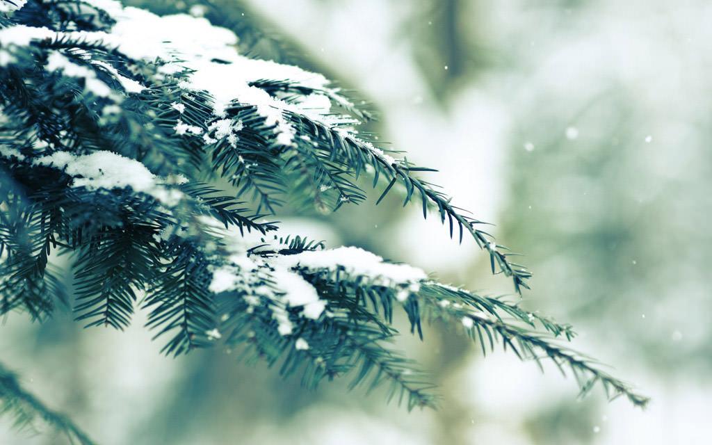 Hình ảnh tuyết rơi trên lá cây