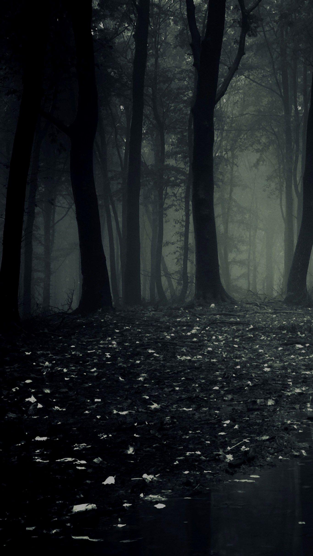 Hình nền khu rừng tối cho điện thoại