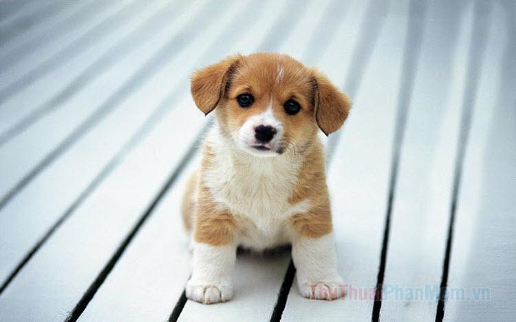 Hình ảnh những chó dễ thương dễ thương