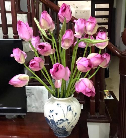 Cách chơi hoa sen cắm hoa sen cực đpẹ