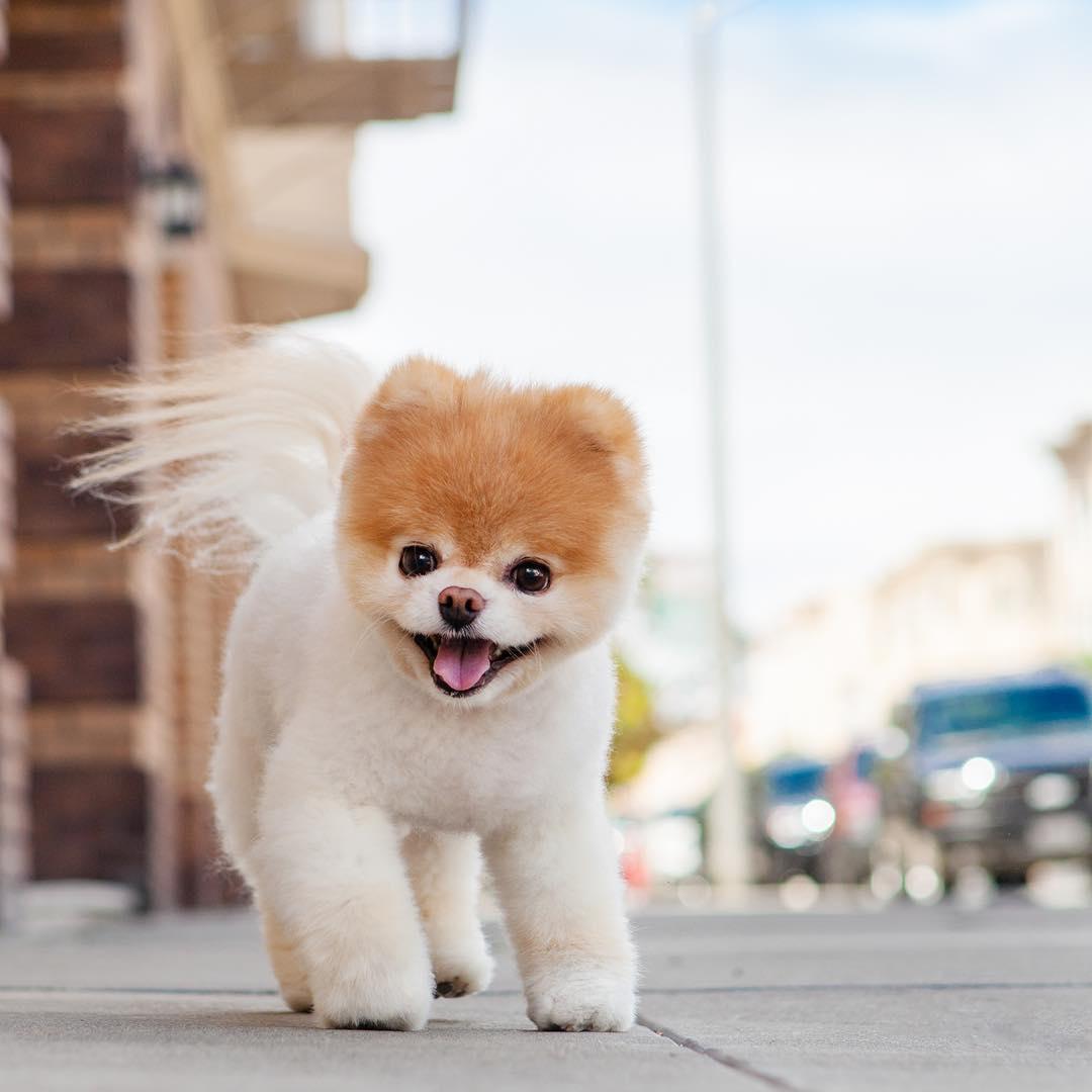 Top hình ảnh những chú chó con dễ thương
