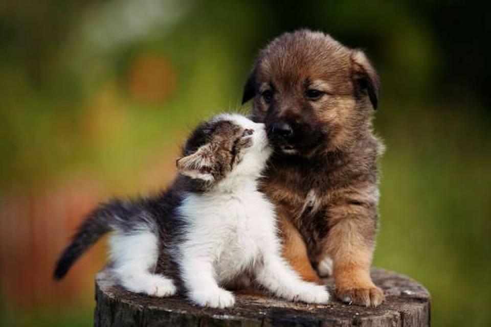 Ảnh chó và mèo dễ thương