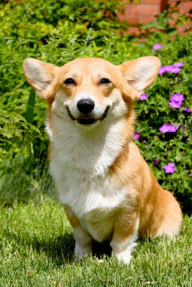 Ảnh đẹp chú chó dễ thương