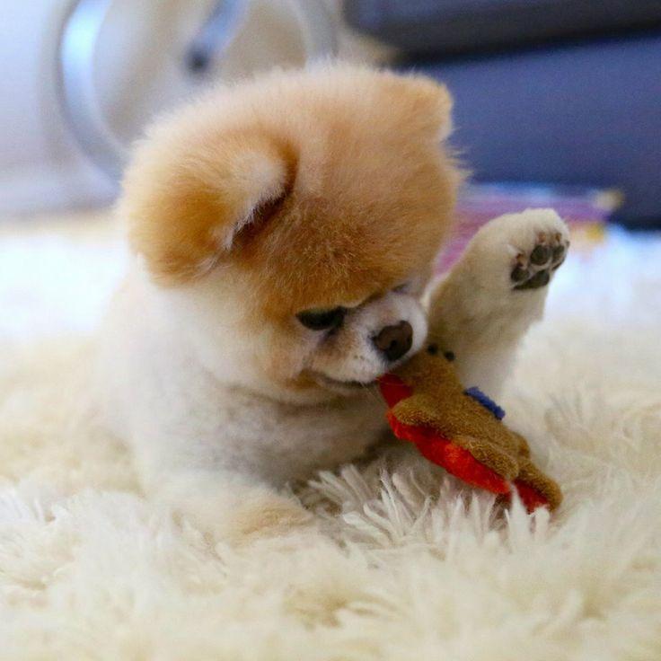 Hình ảnh chó con dễ thương đẹp nhất