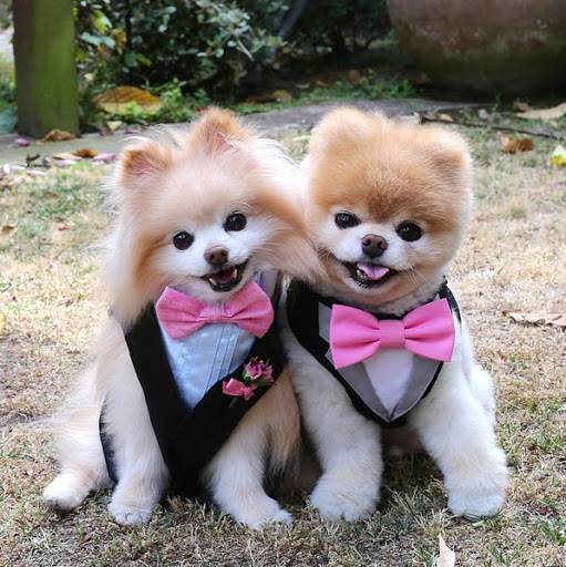 Hình ảnh chó con đẹp và dễ thương