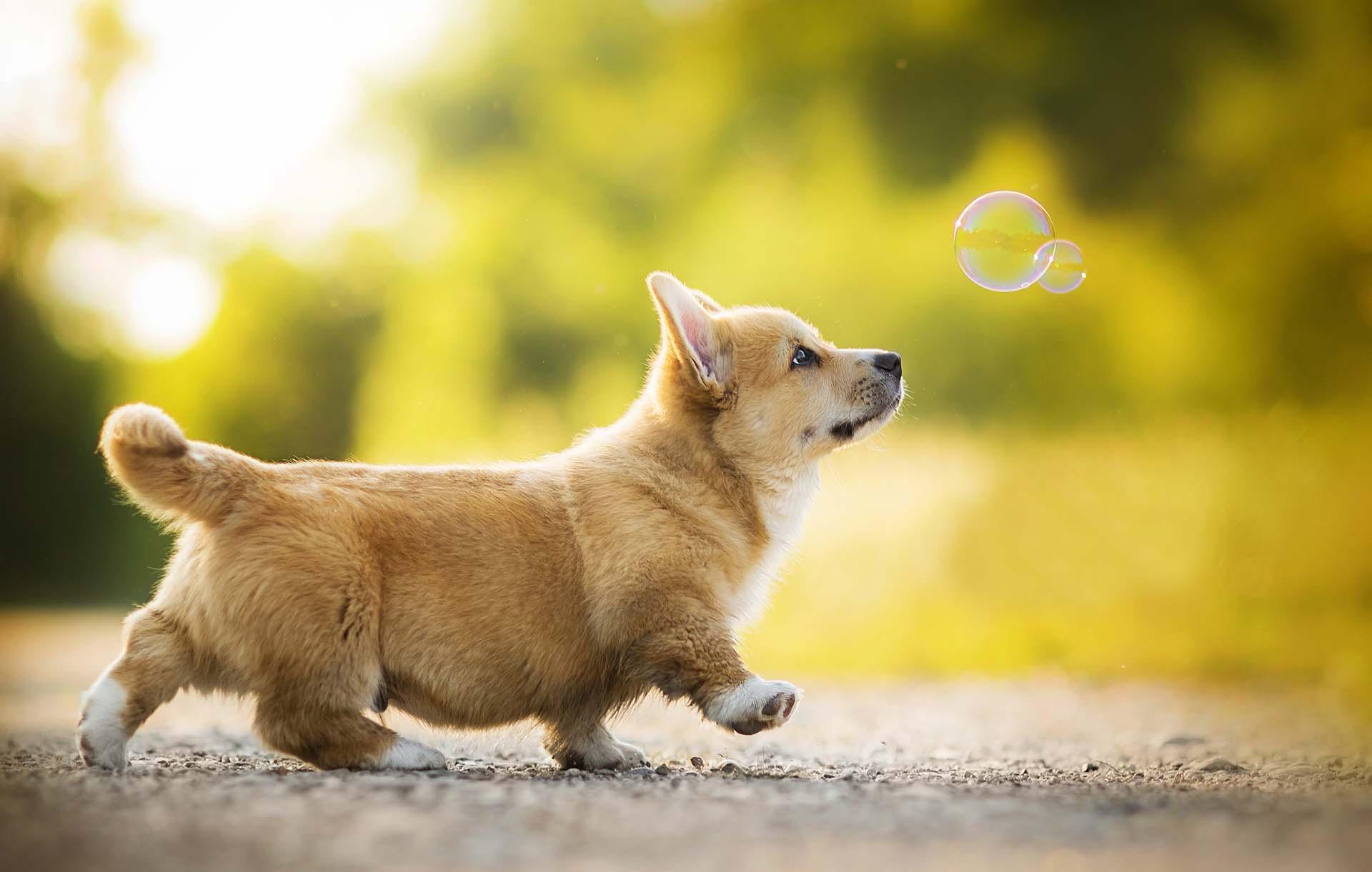 Hình ảnh chó đáng yêu dễ thương