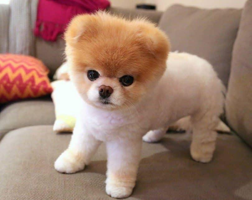 Hình ảnh chó đáng yêu nhất