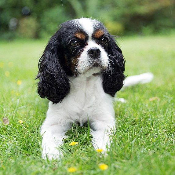 Hình ảnh chó đáng yêu và cute