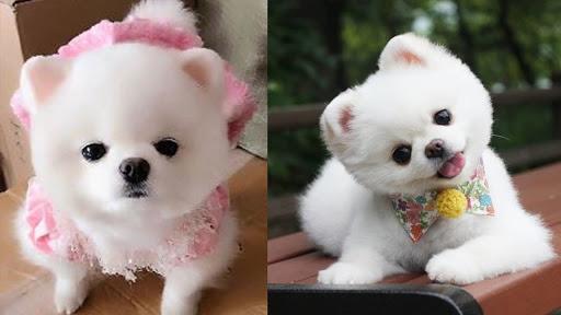 Hình ảnh chó dễ thương nhất