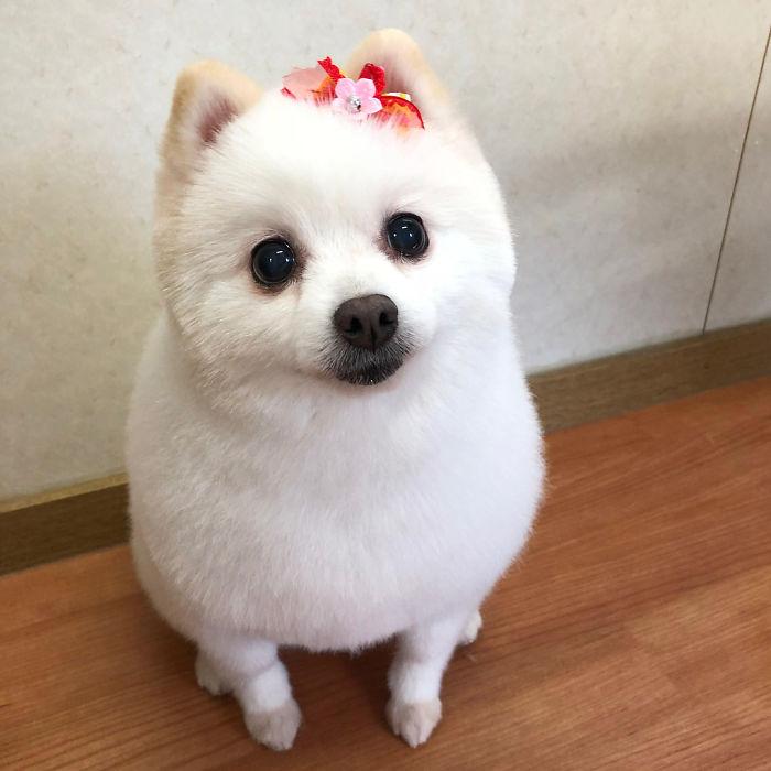 Hình ảnh chó đeo nơ dễ thương