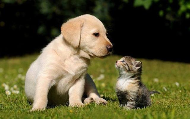 Hình ảnh chó và mèo dễ thương