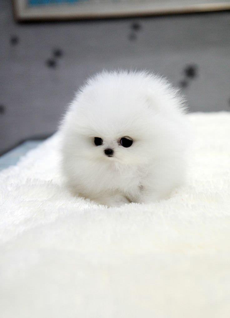 Hình ảnh chú chó cute