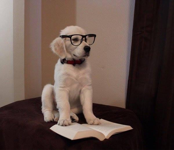 Hình ảnh chú chó đọc sách cute