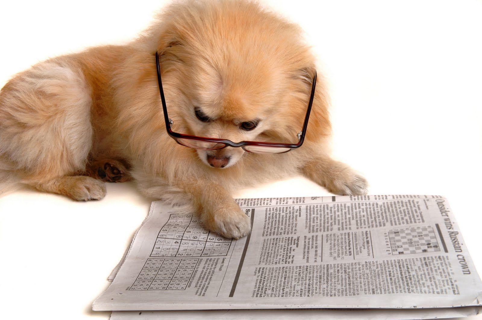 Hình ảnh chú chó đọc sách dễ thương