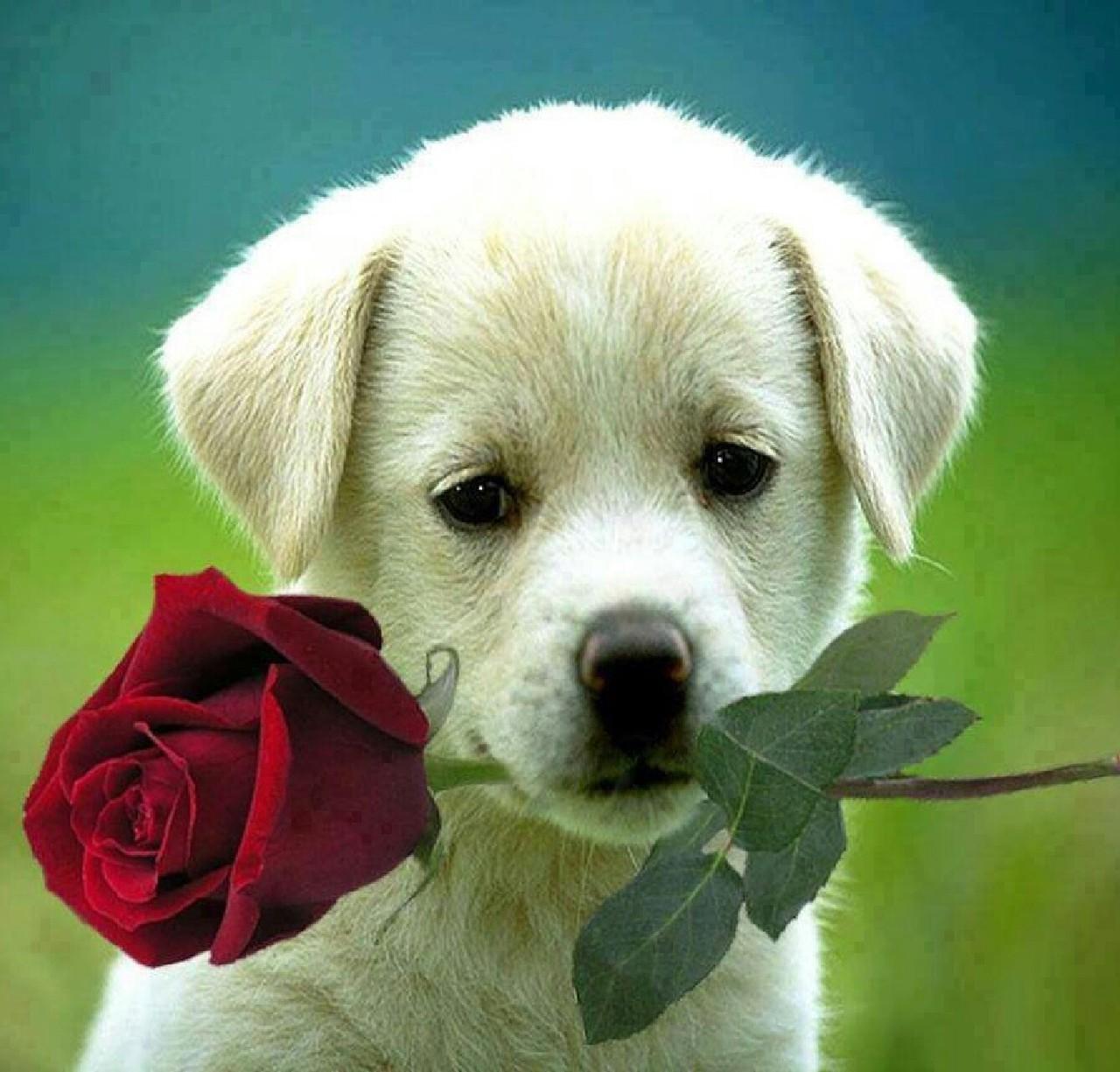 Hình ảnh chú chó ngọt ngào dễ thương