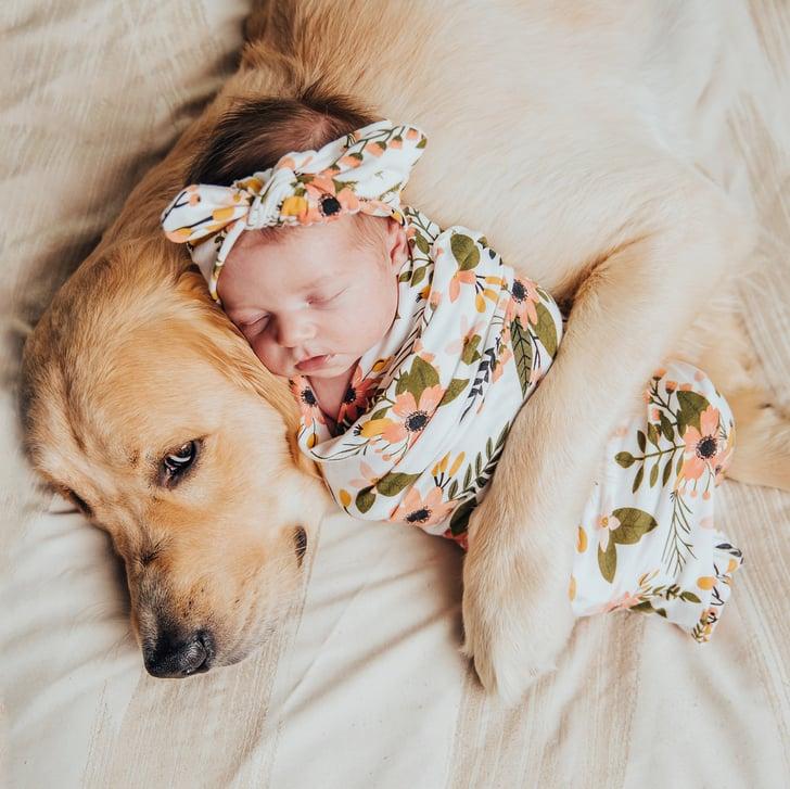 Hình ảnh chú chó và em bé dễ thương