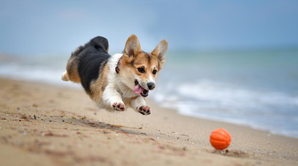 Hình ảnh chú chó vui đùa dễ thương