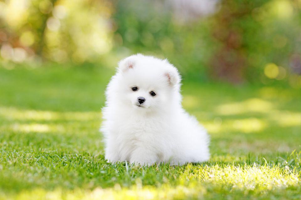 Hình ảnh chú cún dễ thương