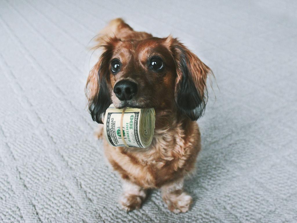 Hình ảnh con chó dễ thương nhất