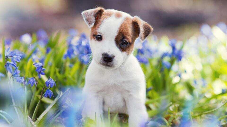 Hình ảnh con chó dễ thương