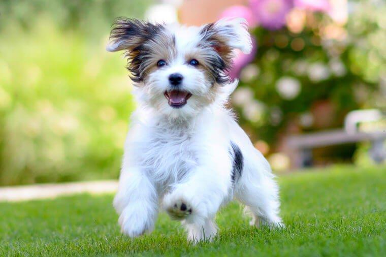 Hình ảnh con chó vui vẻ, dễ thương