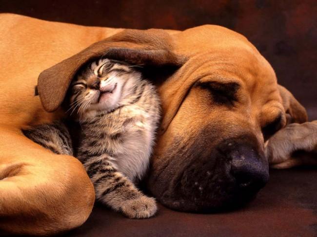 Hình ảnh dễ thương của chó mèo