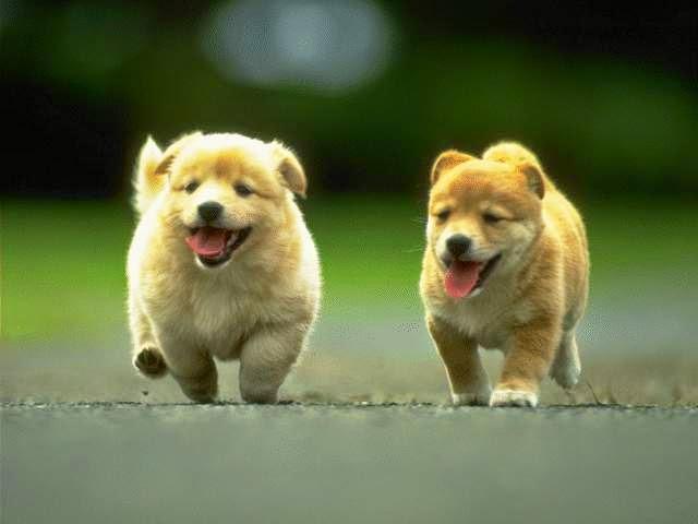 Hình ảnh về những chú chó dễ thương