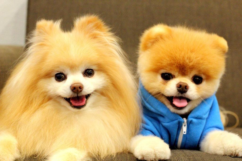 Hình chó dễ thương