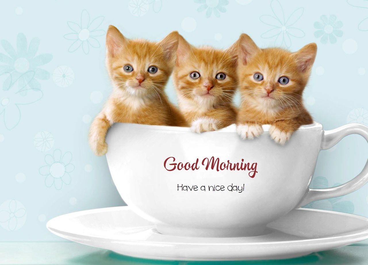 Ảnh những chú mèo chúc buổi sáng dễ thương