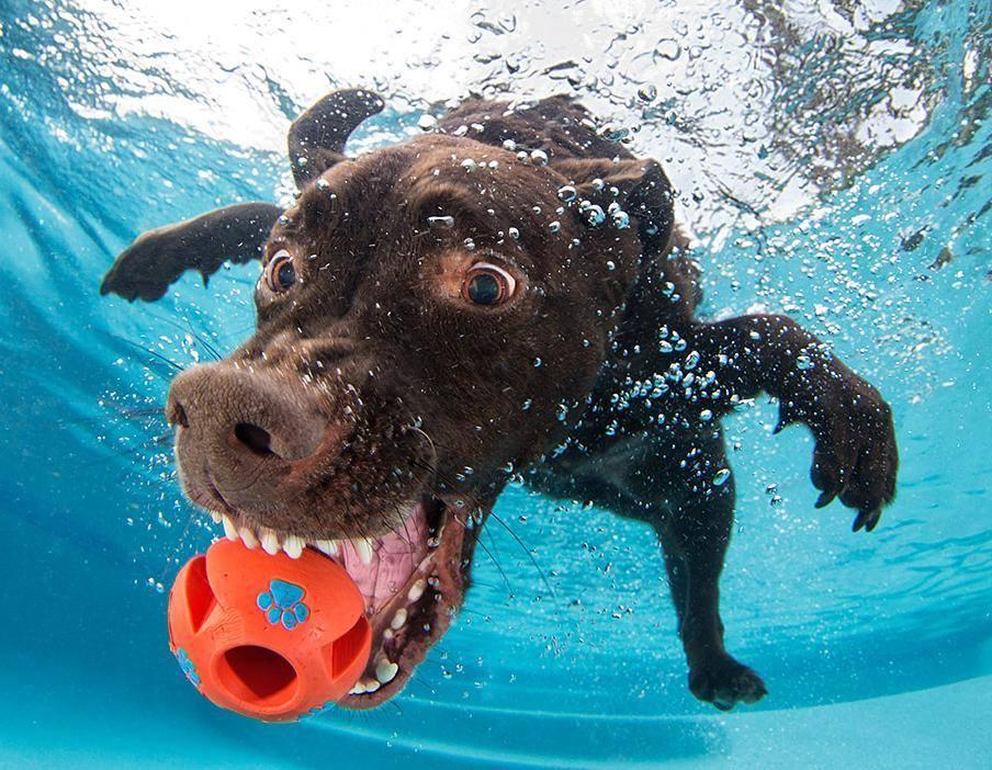 Biểu cảm dễ thương hài hước của những chú chó dưới nước