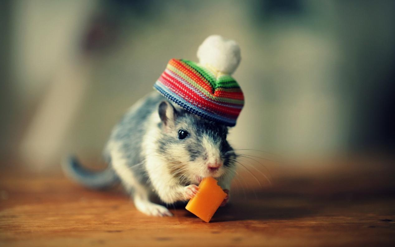 Biểu cảm những con chuột cute dễ thương