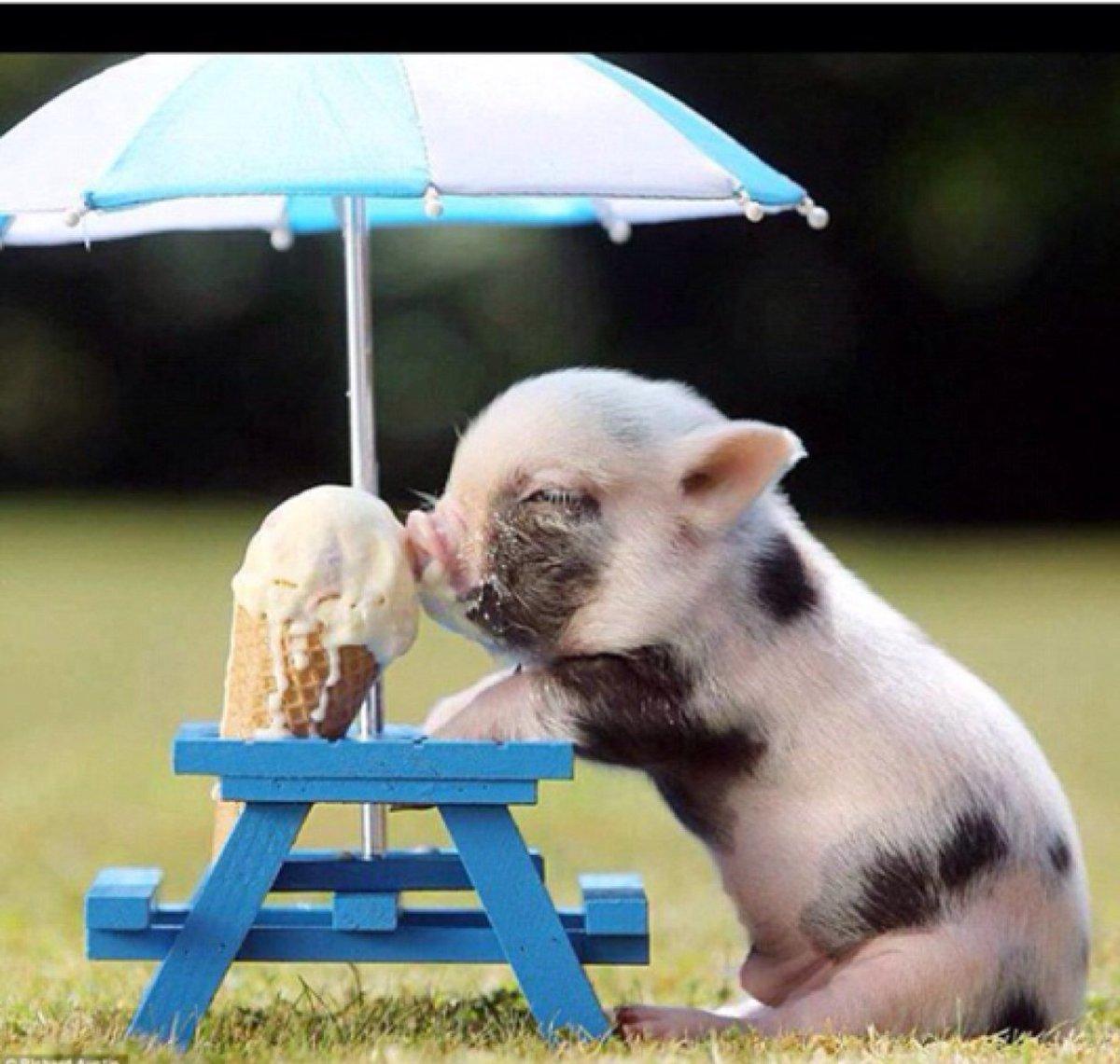 Hình ảnh chú lợn dễ thương