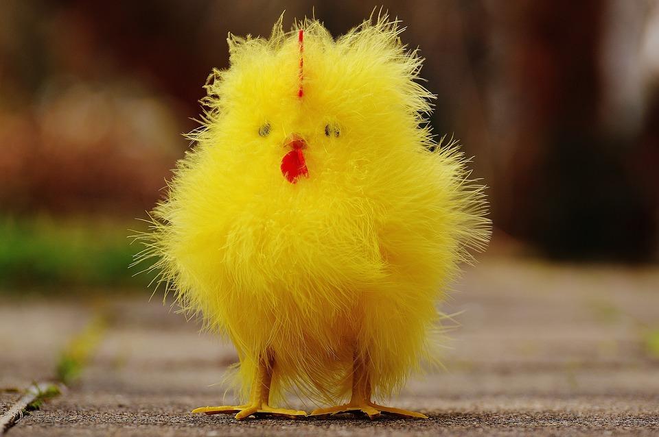 Hình ảnh con gà con dễ thương nhất