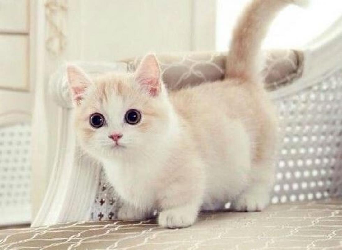 Hình ảnh mèo con kute