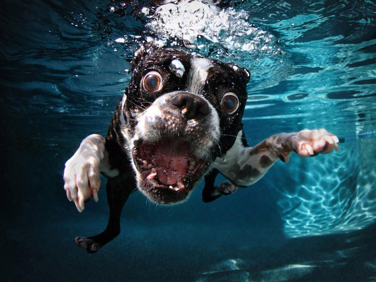 Hình ảnh những chú chó dưới nước dễ thương