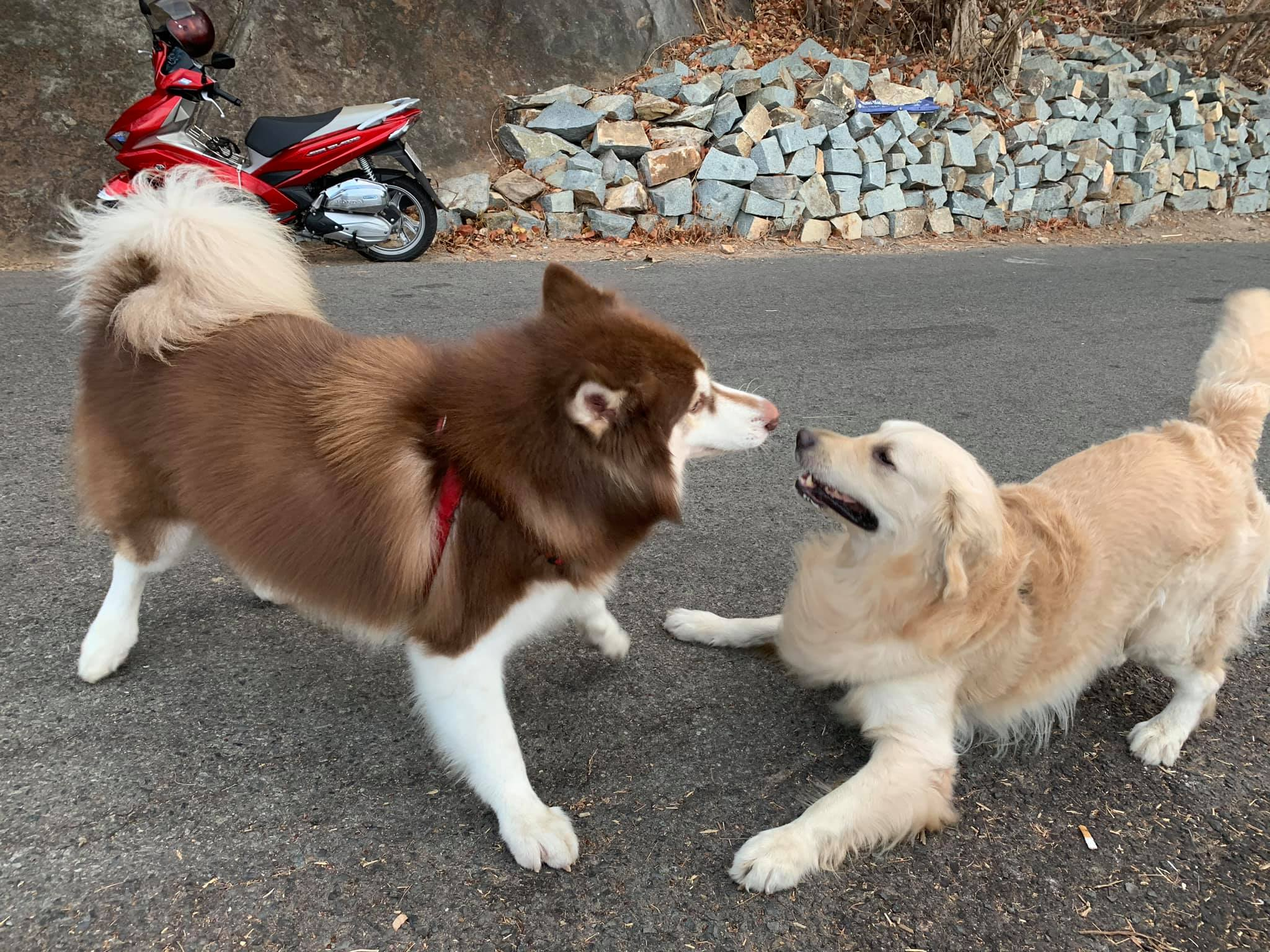 Hình ảnh những chú chó kute