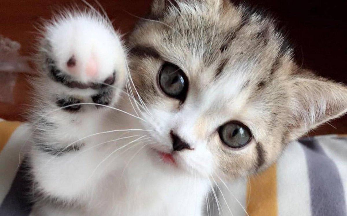 Hình ảnh những chú mèo cute dễ thương