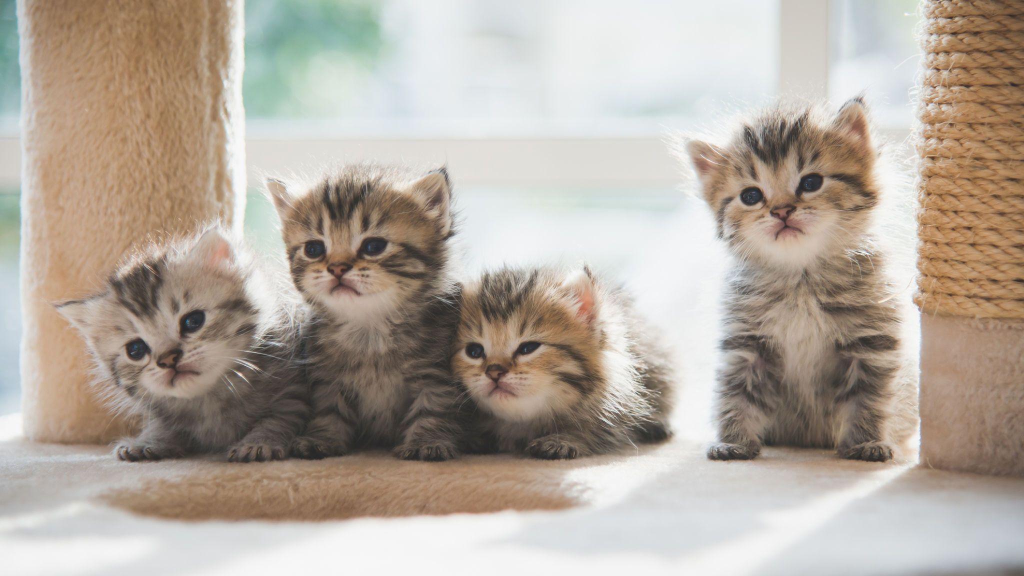 Hình ảnh những con mèo con kute