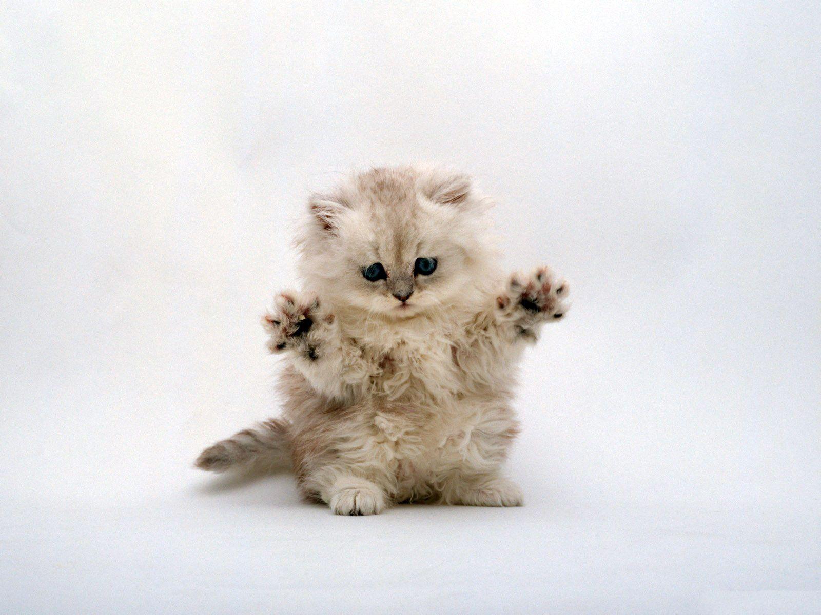 Hình ảnh những con mèo dễ thương