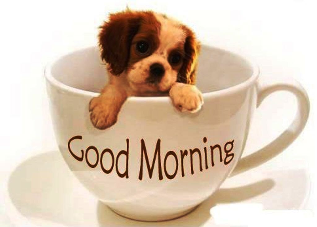 Lovely Pic Good Morning