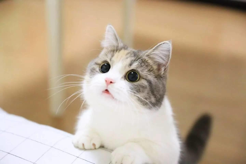 Những chú mèo kute dễ thương