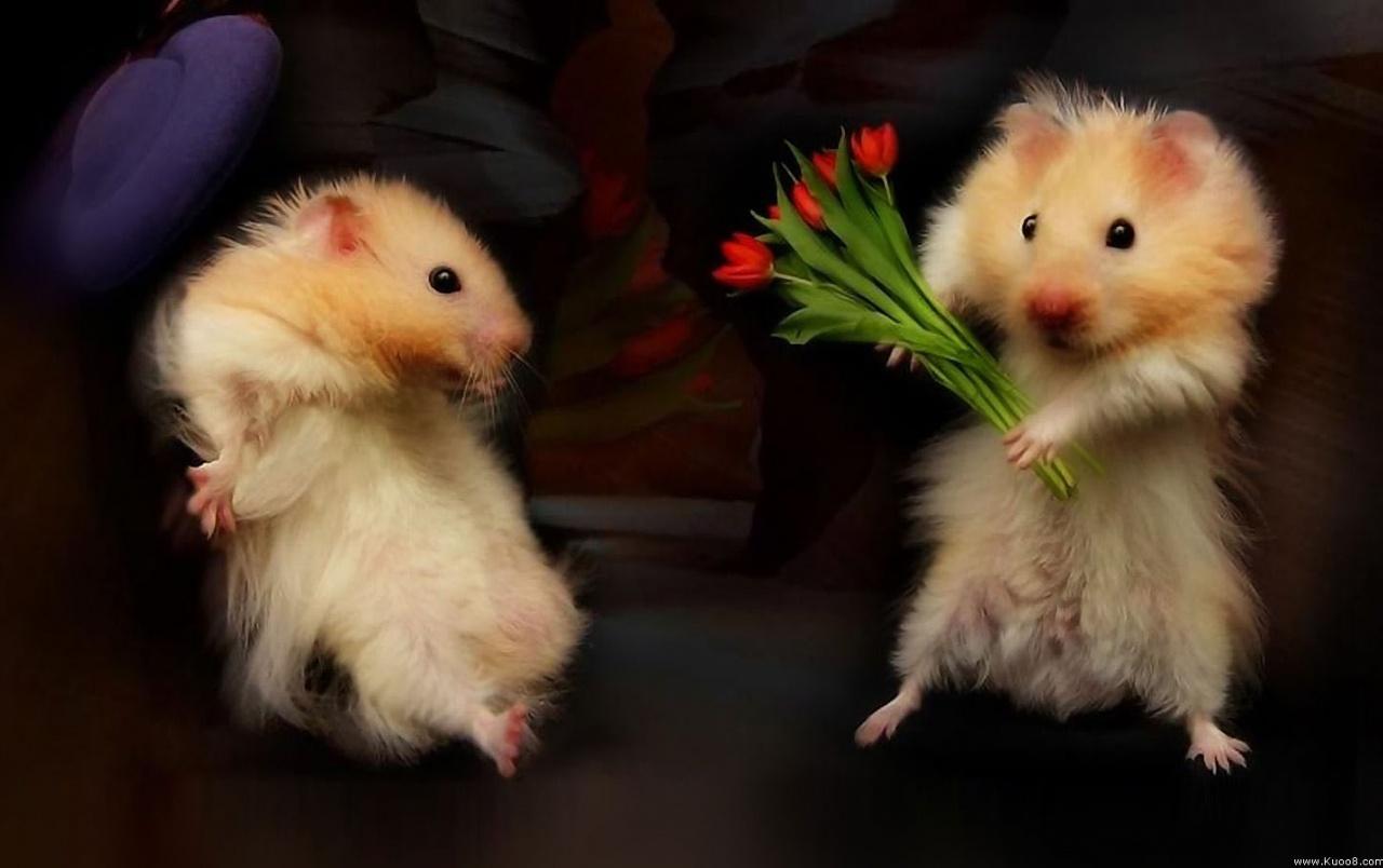 Những con chuột cute dễ thương