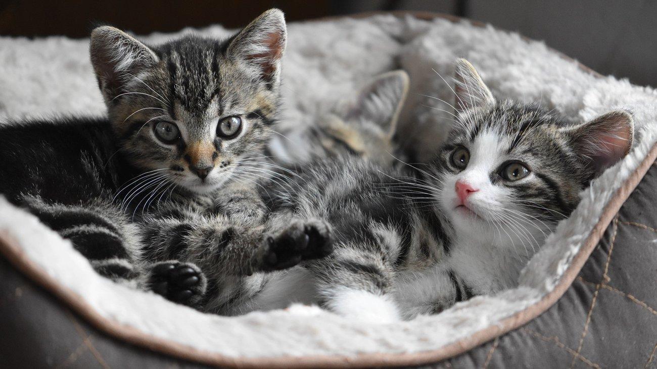 Những con mèo dễ thương nhất quả đất