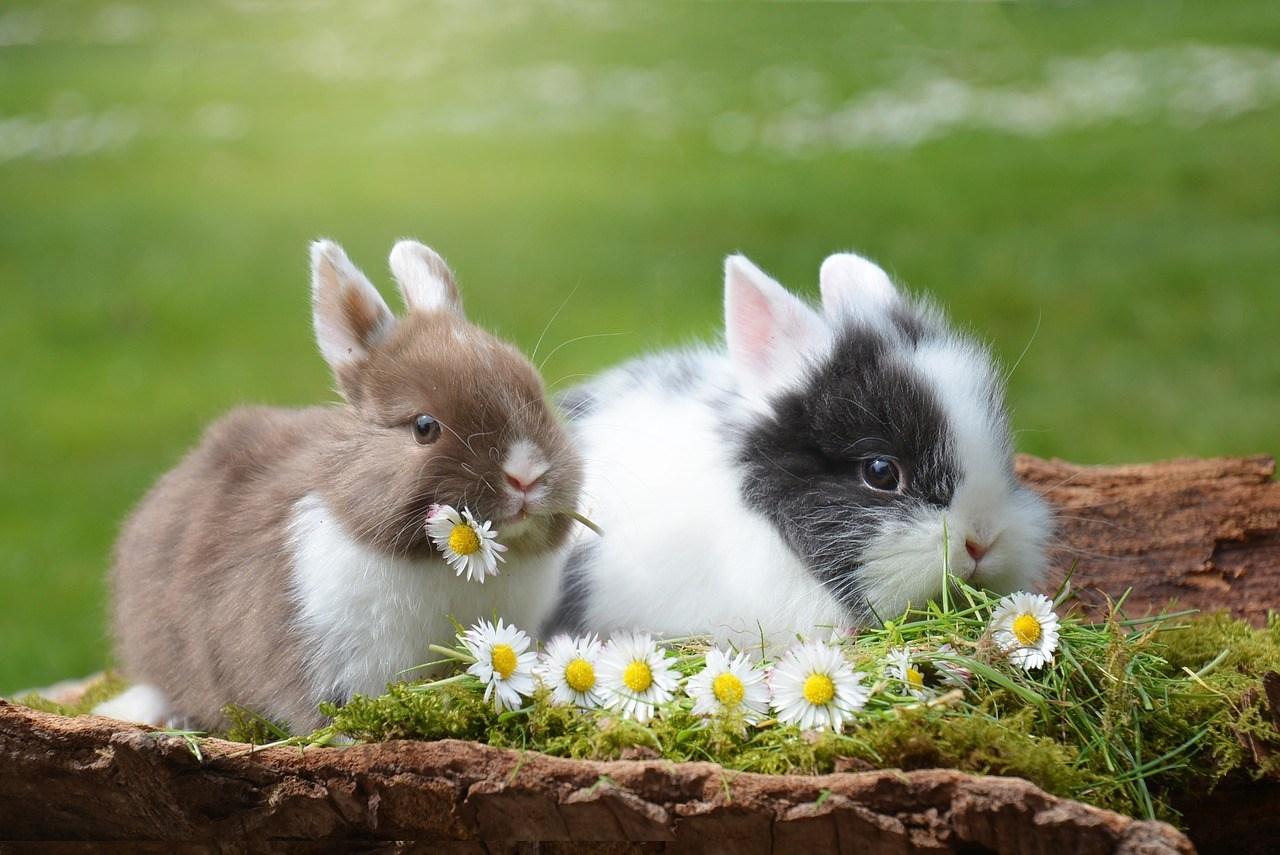 Những con thỏ con cute dễ thương