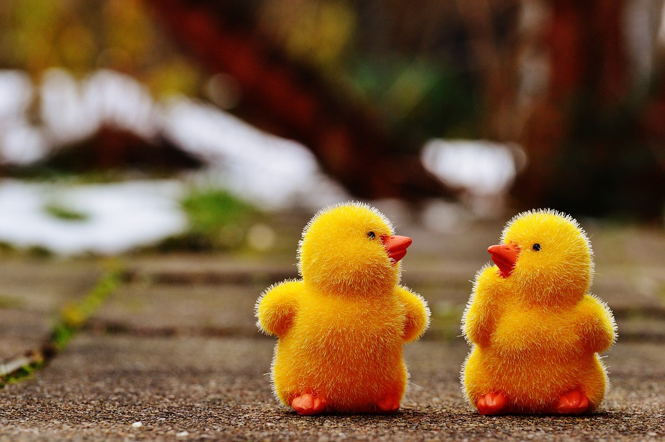 Những hình ảnh gà con kute dễ thương