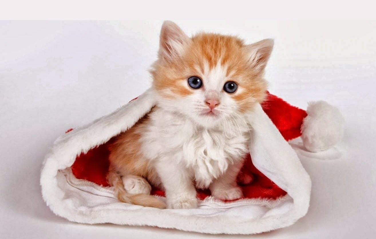 Những hình ảnh mèo con kute